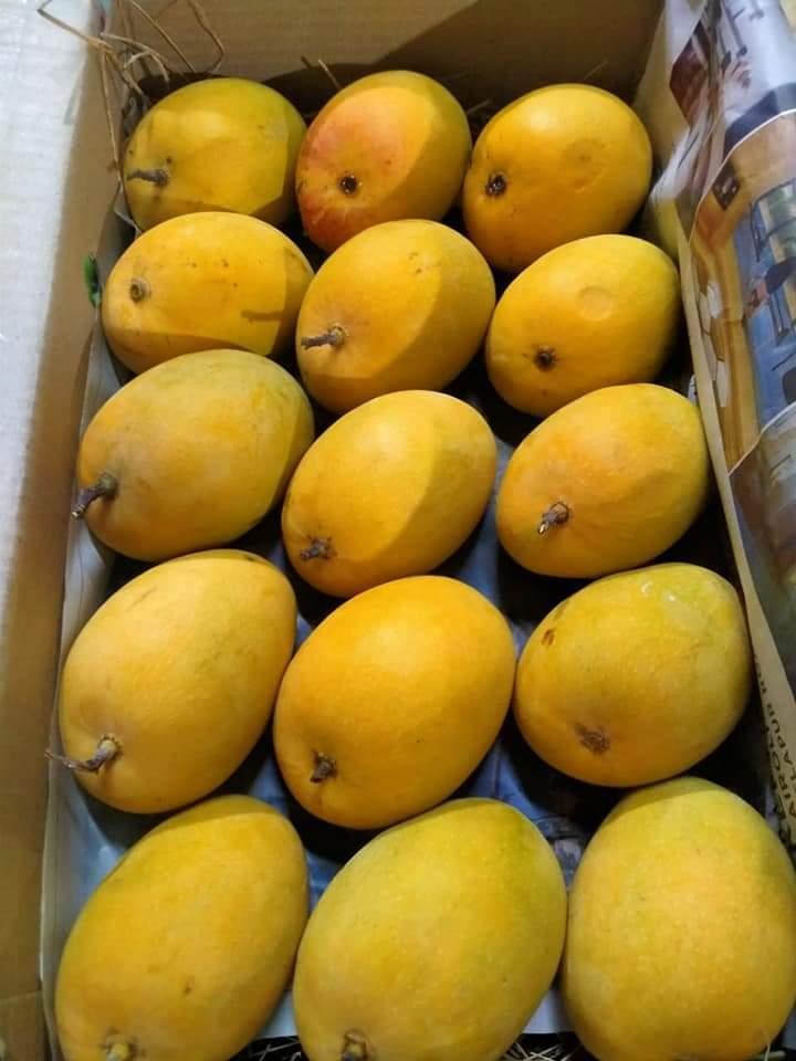 Online Devgad Hapus Aphonso Mangoes in Pune